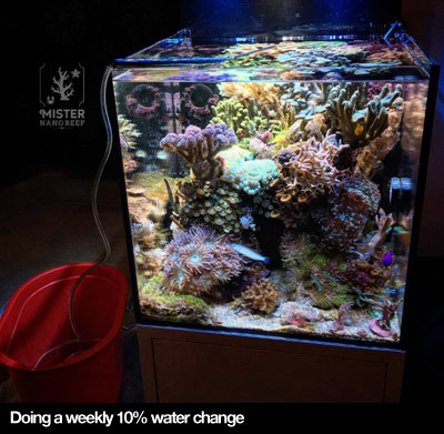 Nano Reef Care Water Change