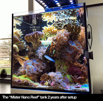 Nano Reef Setup Mister Nano Reef