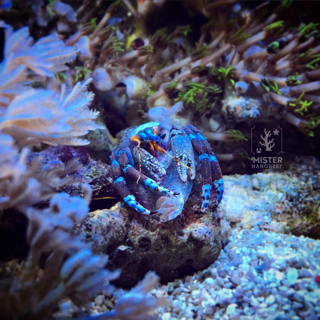 Hermit Crab Molt
