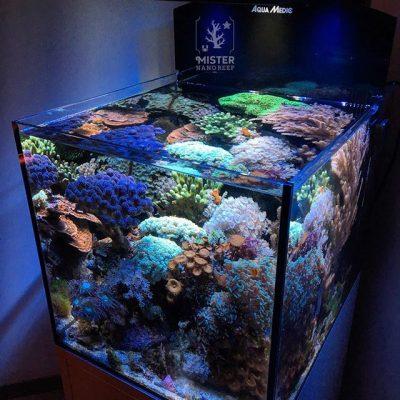 Mister-nano-reef-tank
