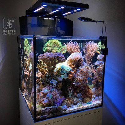 Mister-nano-reef-tank02